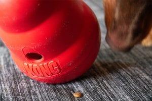 Hond speelt met Kong Wobbler