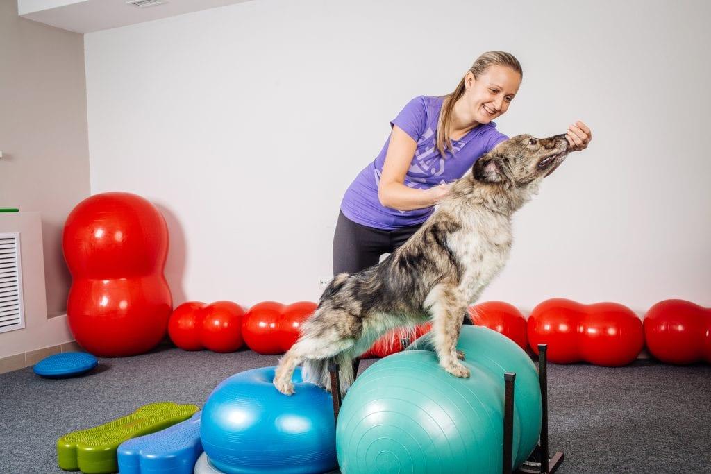 Hond doet fitness oefeningen met begeleider