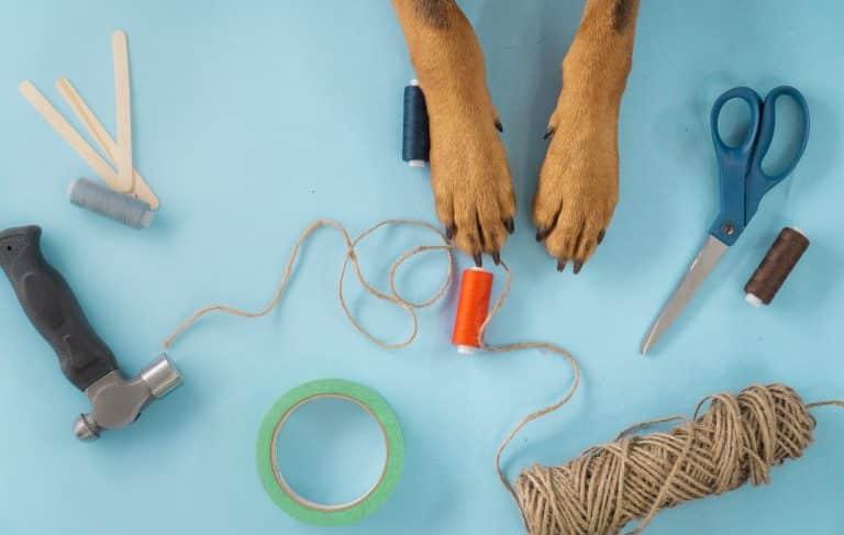 Blauwe achtergrond met knutsel spullen en hondenpoten