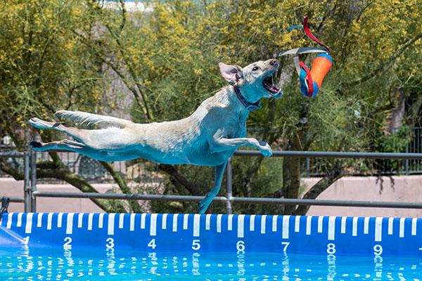 Hond vangt hondenspeeltje boven zwembad