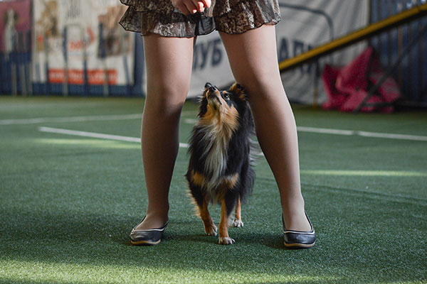 Kleine hond voert dans uit samen met baas