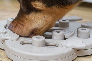 Hond speelt hondenpuzzel van Nina Ottosson
