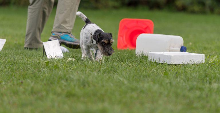 Hond doet snuffelspel samen met zijn baas.