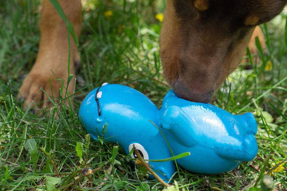 Hond speelt met de 3-Play-Hippo van Cycle Dog.