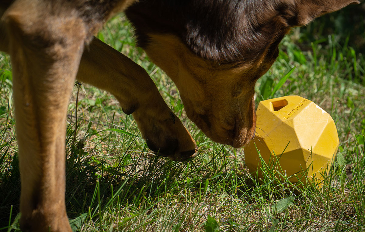 Hond speelt met Gnawt-a-Rock van Ruffwear.