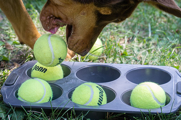 hond-tennisballen-muffinblik2