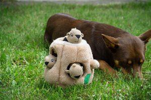 Hide A Squirrel van Outward Hound met hond op de achtergrond