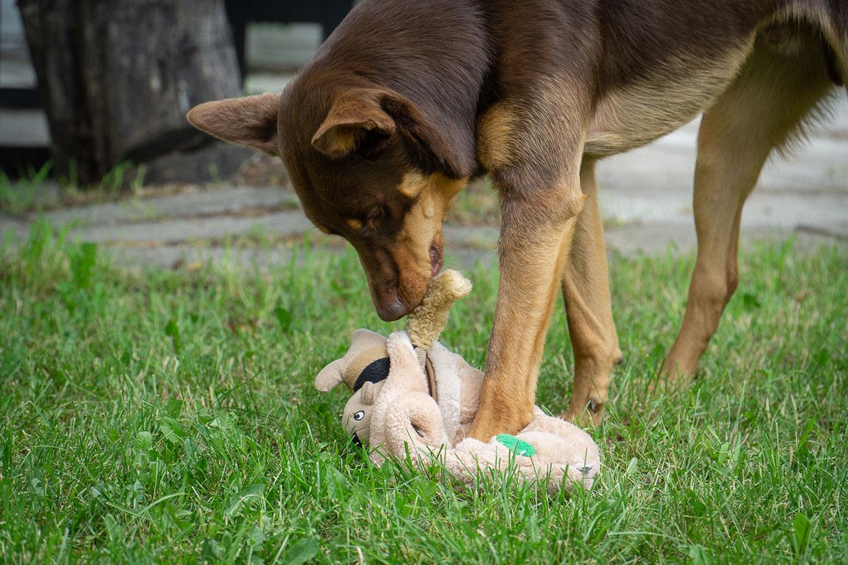 Hond speelt met Hide A Squirrel van Outward Hound